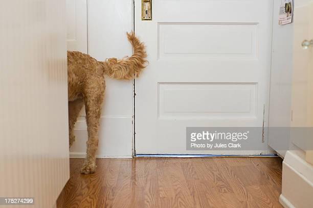 Puppy Dog Tail