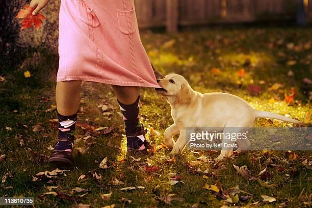 Puppy dog tugging at girls pink dress