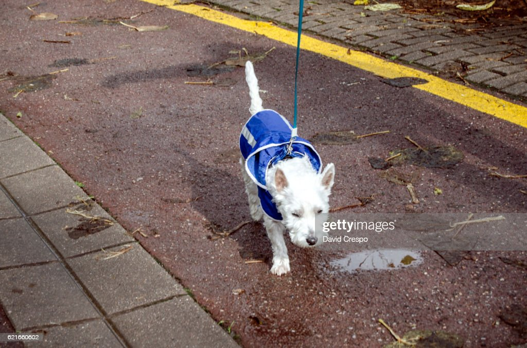 Puppy dog with blue raincoat : Foto de stock
