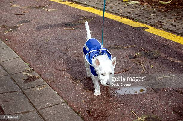 Puppy dog with blue raincoat