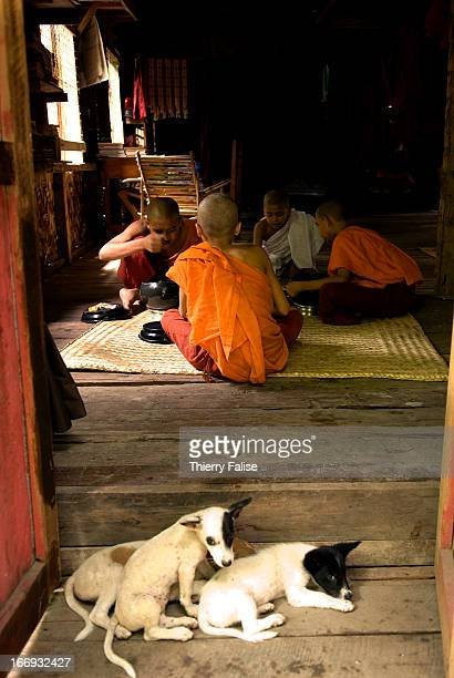 Puppy dogs sleep in front of Buddhist novices eating at the Mahagandayon monastery in Mandalay