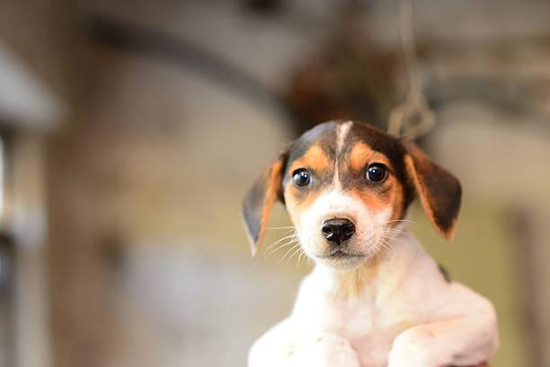 Puppy Eyes Wall Art