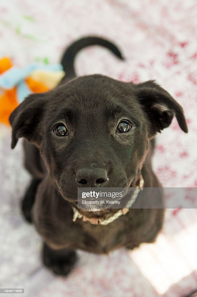 Puppy for adoption. : Stock Photo