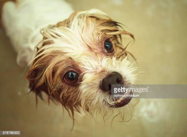 Puppy gets a bubble bath.
