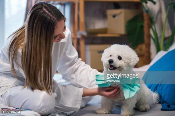 puppy getting ready for the day - dog knotted in woman stock pictures, royalty-free photos & images