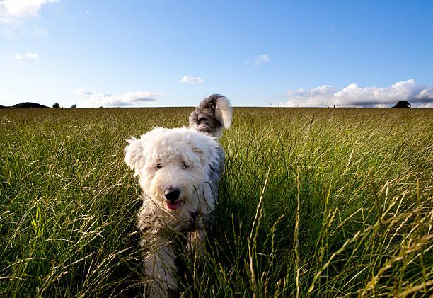Puppy In A Field Wall Art