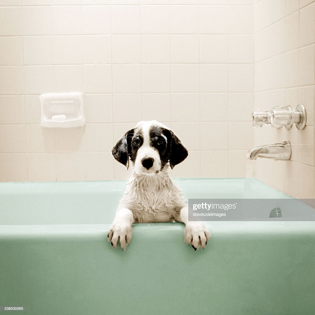 Puppy in Bathtub : Stock Photo