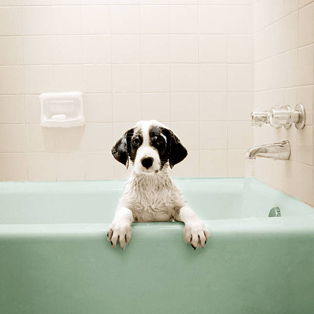 Puppy In Bathtub Wall Art