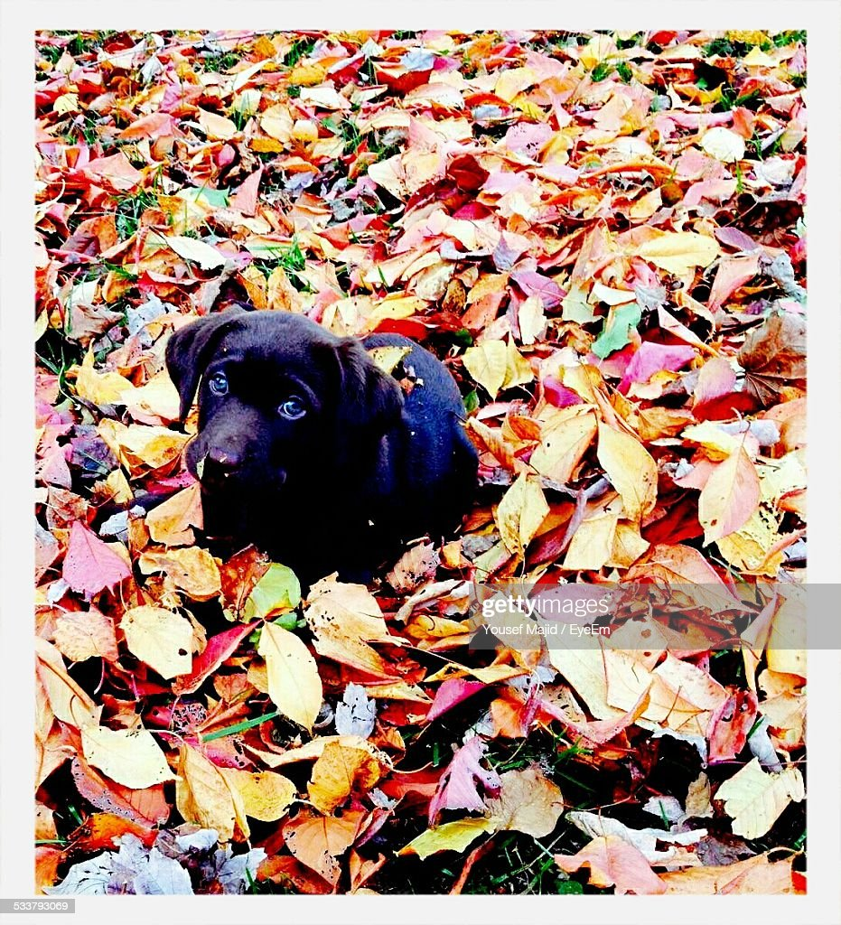 Puppy In Leaves : Foto stock