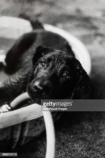 Puppy in Pool