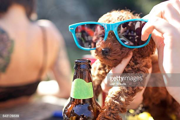 A puppy in sunglasses.
