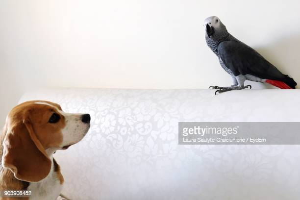 Puppy Looking At Bird Perching On Sofa At Home