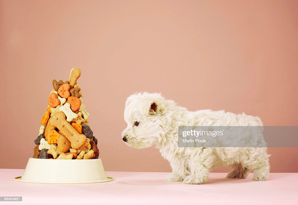 Puppy looking at pile of biscuits in dog bowl : Stock Photo