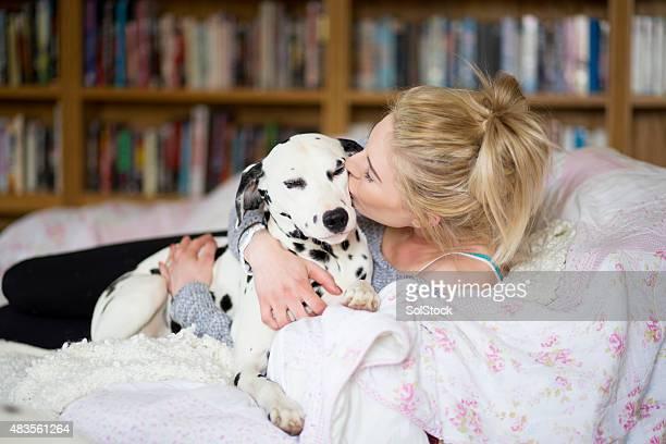 cachorrinho amoroso - dalmata imagens e fotografias de stock
