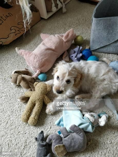 puppy mess - イヌのおもちゃ ストックフォトと画像