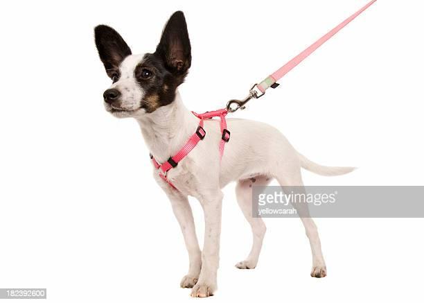 子犬のリード