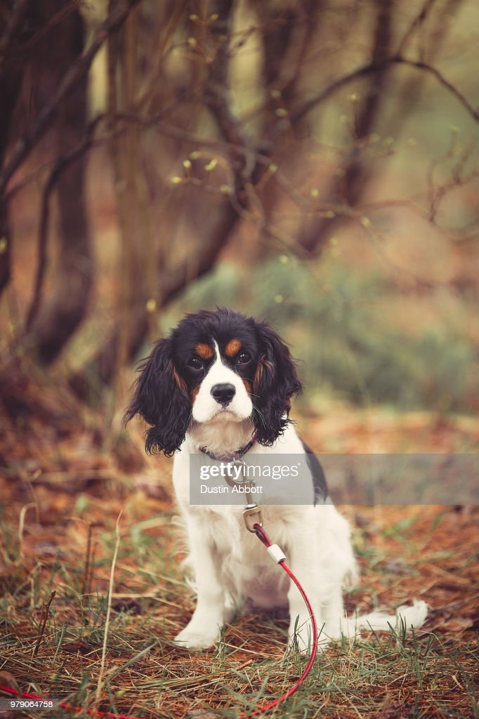 Puppy on a Rainy Day : Stock Photo