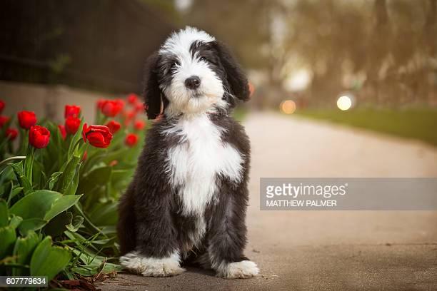 Puppy on a sidewalk