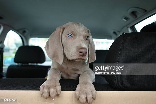 puppy on backseat in car