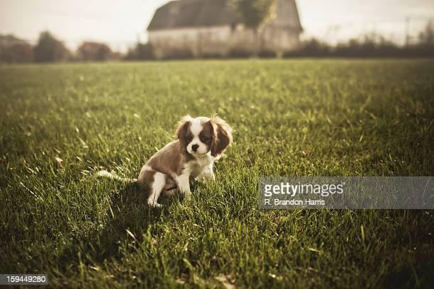 Puppy on the farm