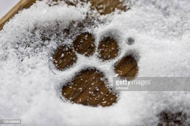 Cachorro pata en la nieve