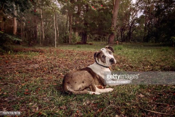 puppy - lianne loach - fotografias e filmes do acervo
