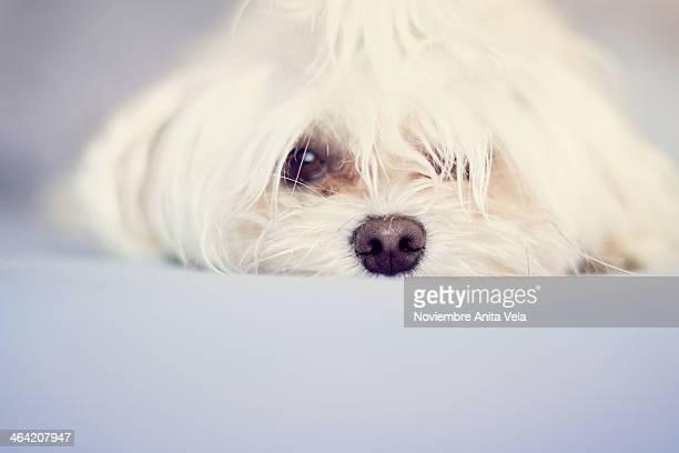 puppy - alcazar de san juan - fotografias e filmes do acervo