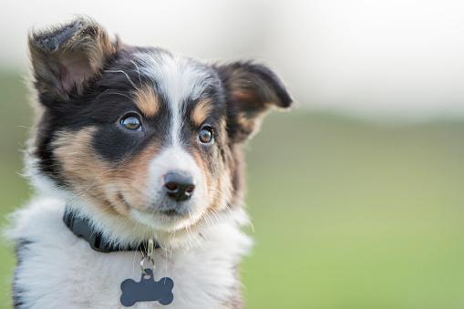 Puppy 823616762