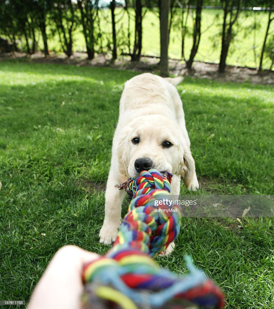 Puppy Playing : Stock Photo