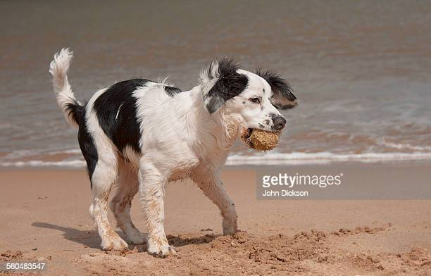 Puppy playing the beach
