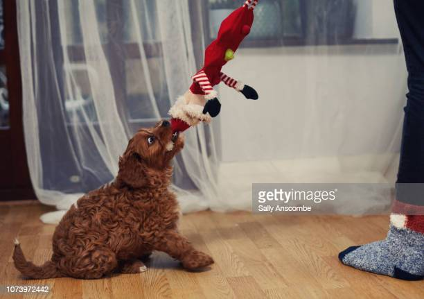 Puppy playing with a Father Christmas toy