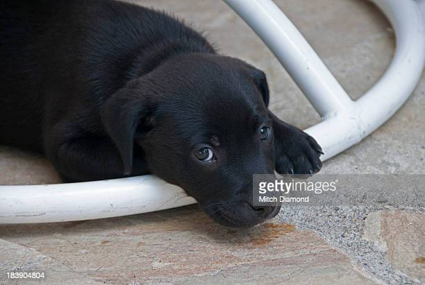 Puppy resting on chair stand