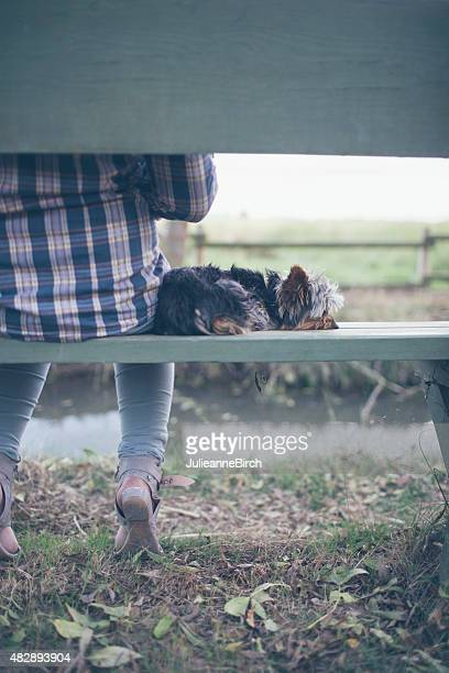 Puppy resting on park bench