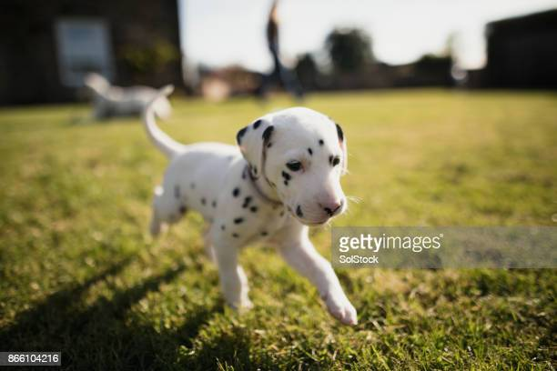 Puppy Running In The Garden