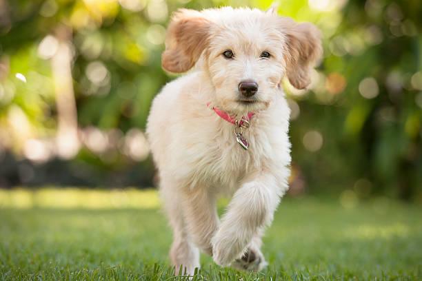 Puppy Running Through The Grass Wall Art