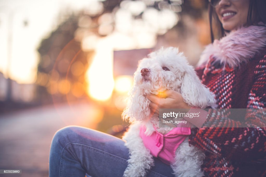 Puppy sitting in her lap : Stock Photo