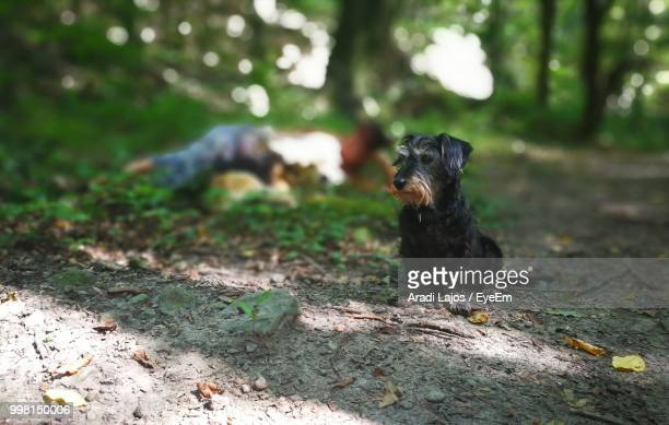 Puppy Sitting On Field In Forest
