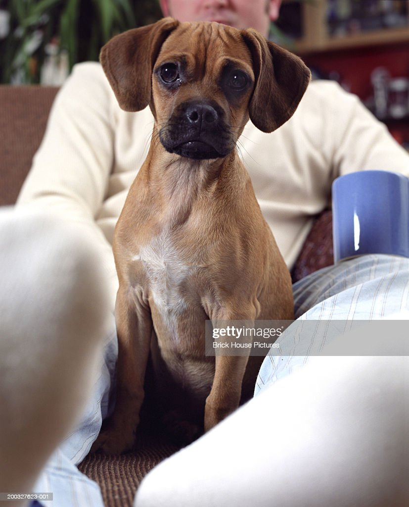 Puppy sitting on ottoman with owner (focus on puppy) : Stock Photo