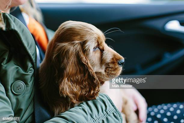 Puppy sitting on womans lap inside vehicle