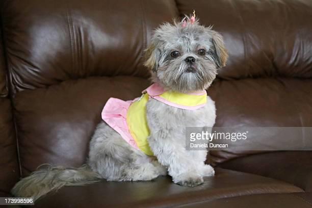 Puppy sitting pretty
