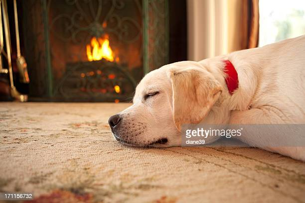 Puppy sleeping by a fireplace