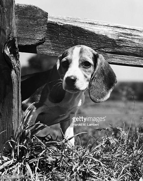 puppy standing below fence - mamífero con garras fotografías e imágenes de stock