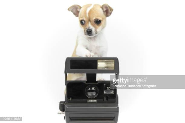 Puppy taking a photo