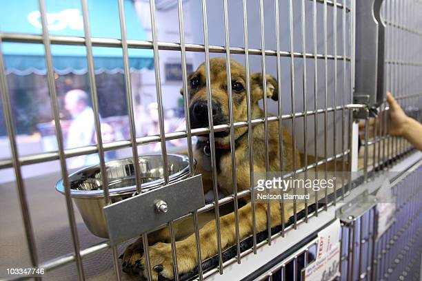 A puppy that is up for adoption is seen in a mobile adoption vehicle during the cat fashion show at the birthday party for Matilda The Algonquin's...