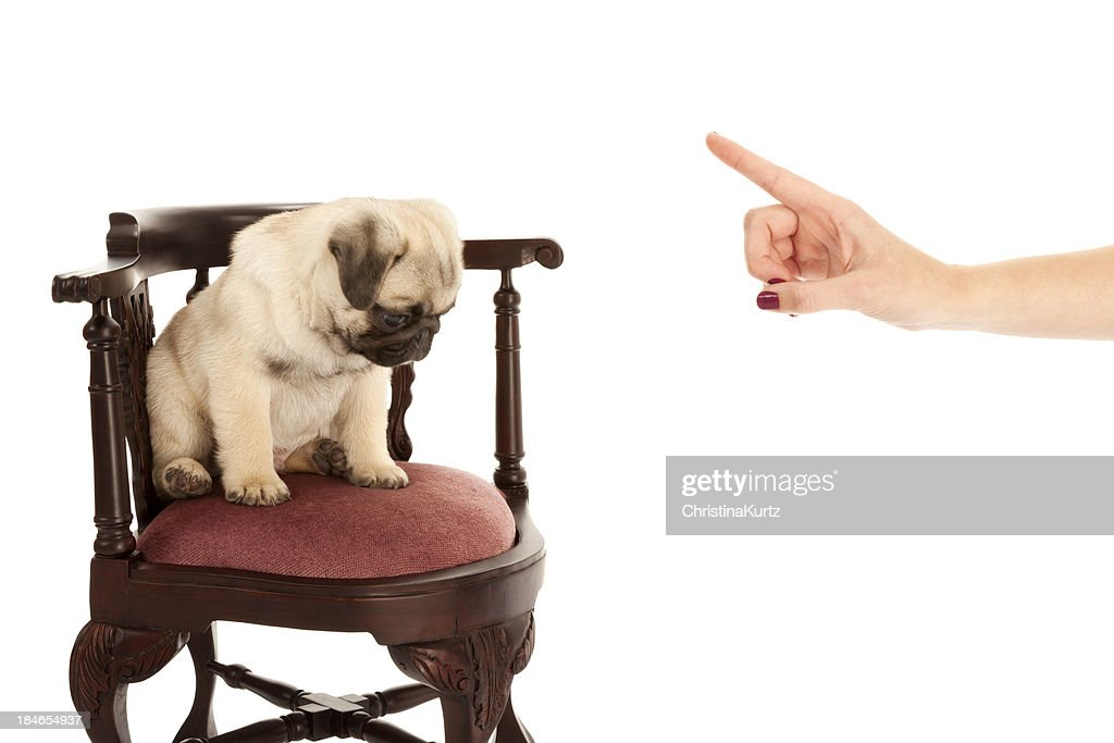 Puppy Time Out : Stock Photo