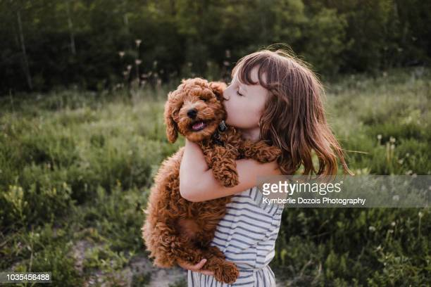 puppy turning away from girl's kisses - hund stock-fotos und bilder