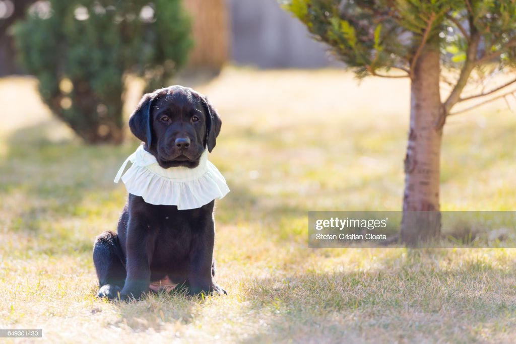 Puppy Wearing Baby Clothes Stock Photo Getty Images