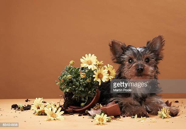 Puppy with broken plant pot