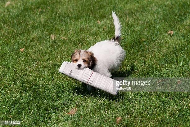子犬、紙 - 動物芸 ストックフォトと画像