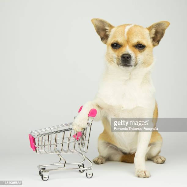 Puppy with shopping cart